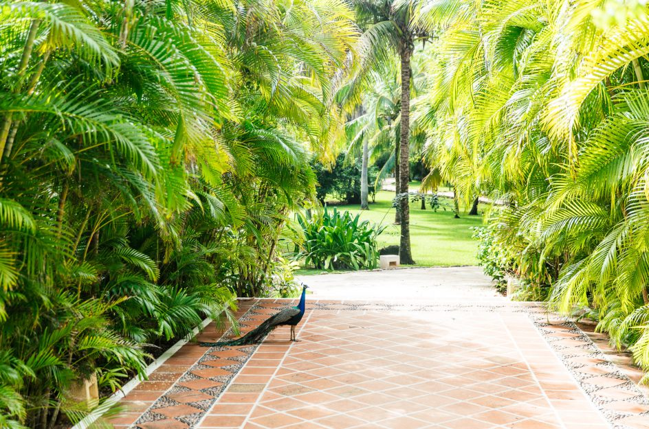Palm garden view from main house