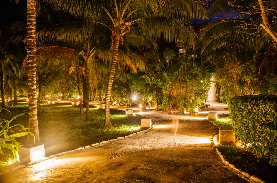 Palm garden at night